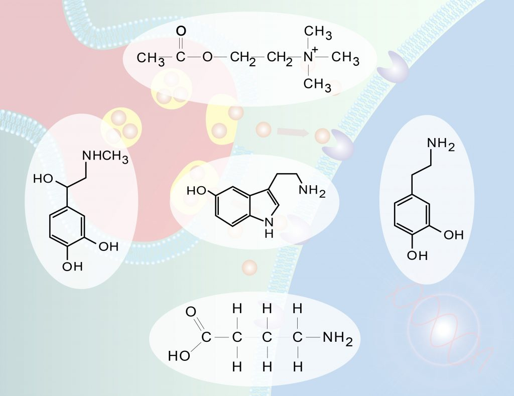 How CBD Affects Neurotransmitters